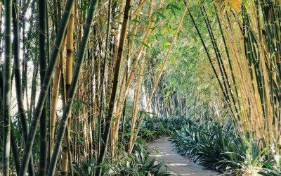 Pasadena's Garden Paradise